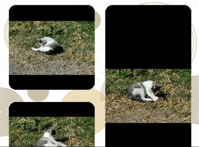 bondgård kattunge